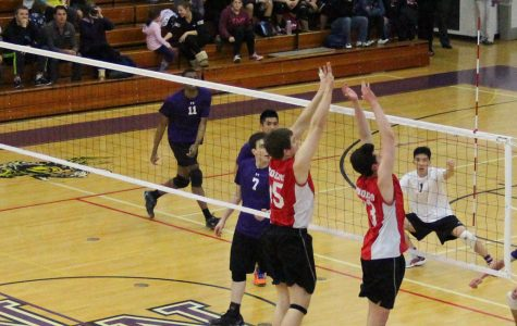 Vikings fall to Wolves in volleyball home opener