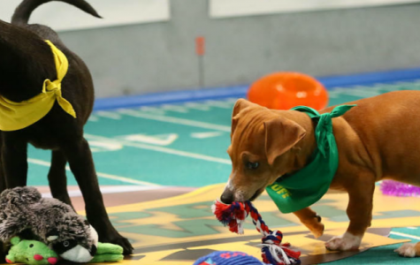 Fluffs strut their stuff and conquer Puppy Bowl XIII