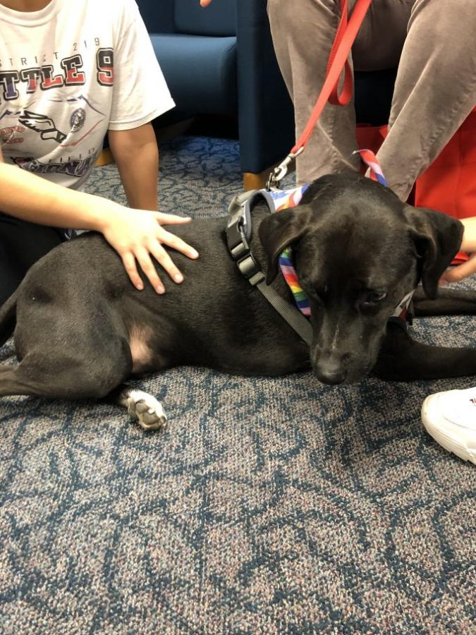 Rainbow+Animal+Assisted+Therapy+visited+students+in+the+Library+on+Dec.+16.