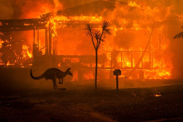 With innumerous blazing flames through the continent, these Australian wildfires have been one of the most devastating events in the world so far.
